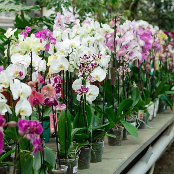 Саксийни растения и аранжировки